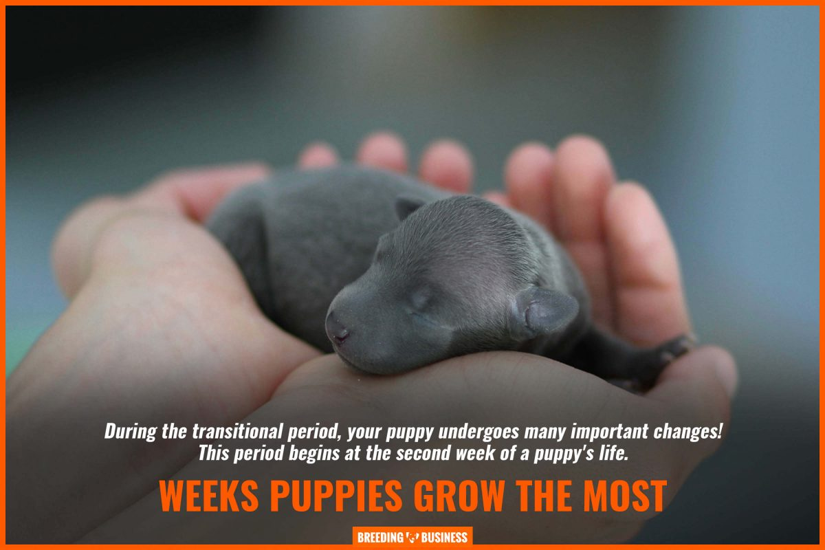 weeks puppies grow the most