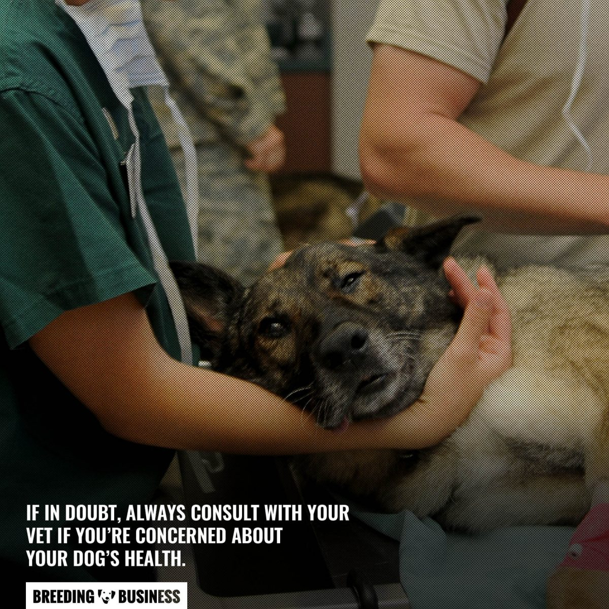 when in doubt consult a vet