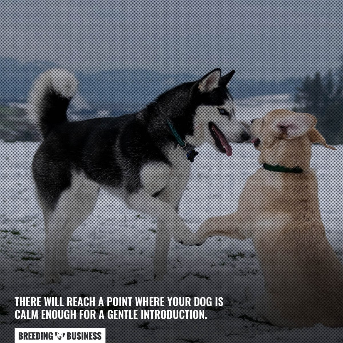 a gentle introduction between dogs