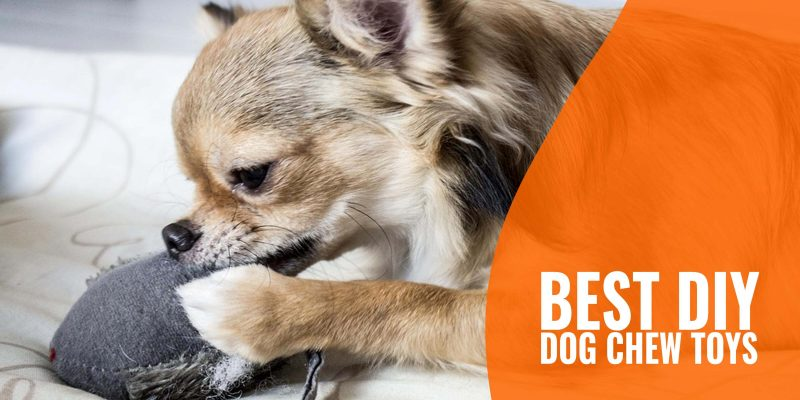 best diy dog chew toys