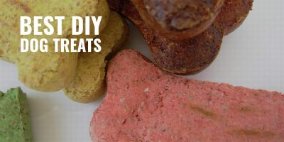 20 Best DIY Dog Treat Recipes