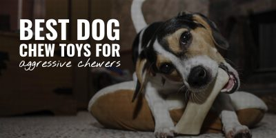 10 Best Dog Chew Toys For Aggressive Chewers