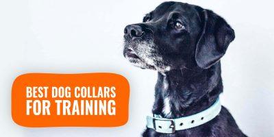 best dog collars for training