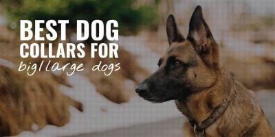 10 Best Dog Collars For Big Dogs