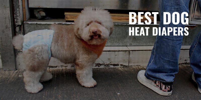 best dog heat diapers