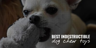 best indestructible dog chew toys
