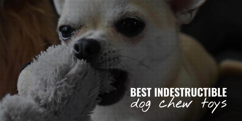 best indestructible dog chew toys