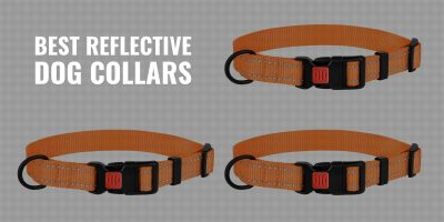 best reflective dog collars