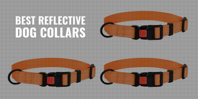 11 Best Reflective Dog Collars