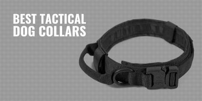 7 Best Tactical Dog Collars