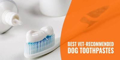 best vet recommended dog toothpastes