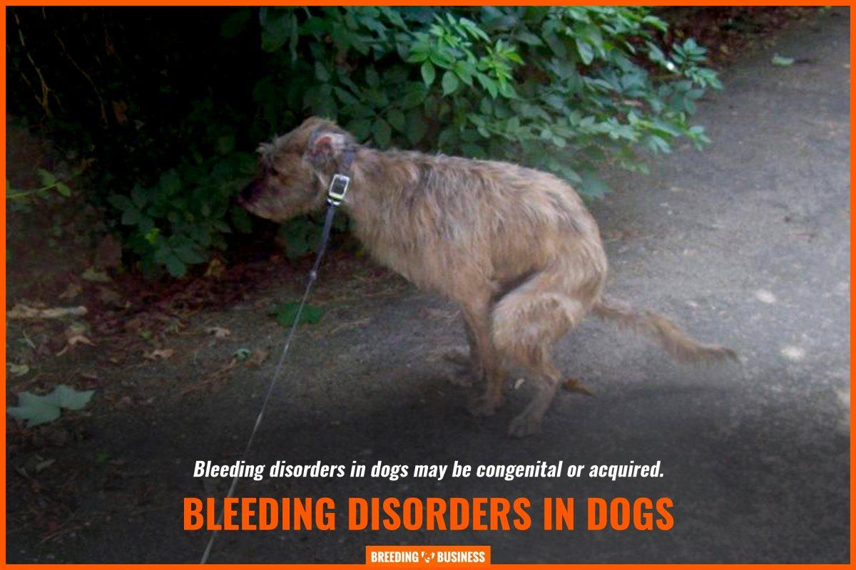 bleeding disorders in dogs