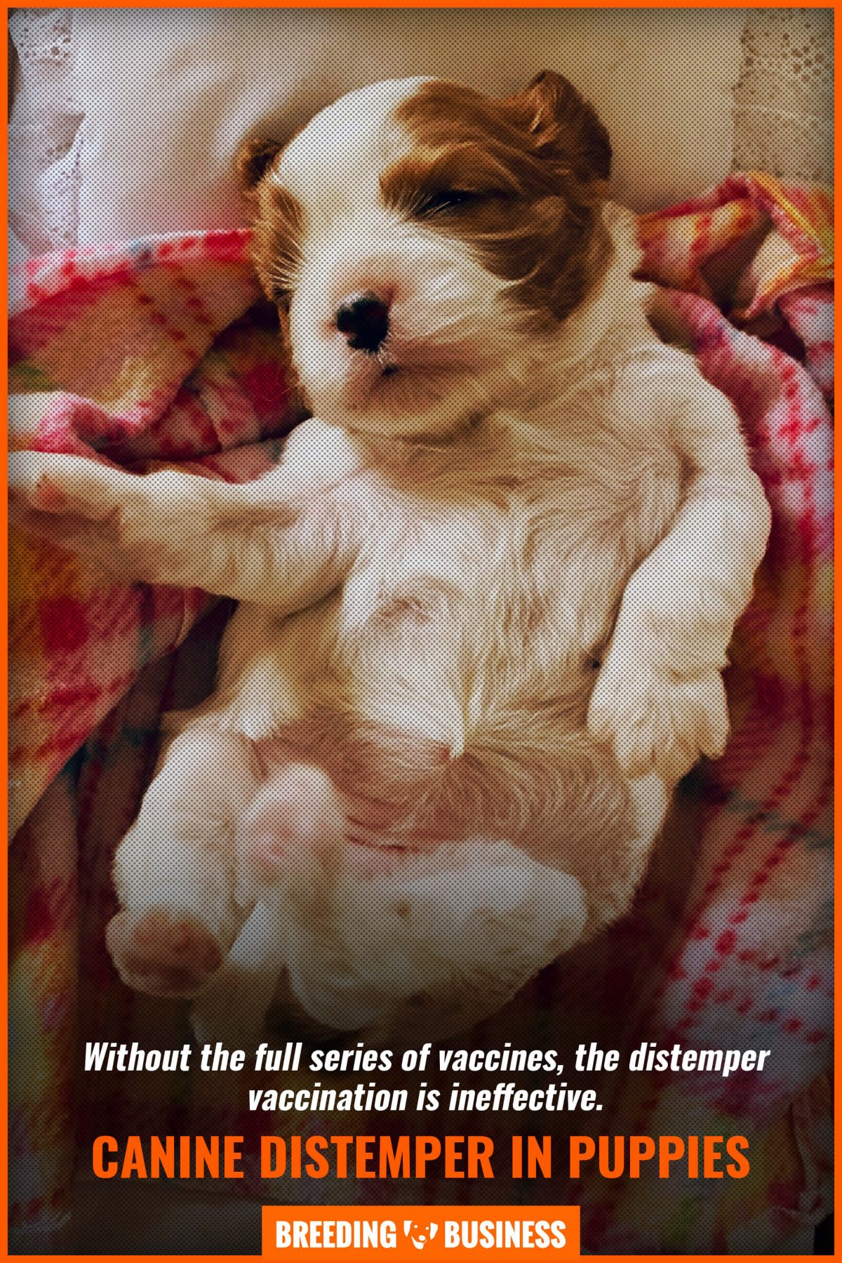canine distemper in puppies