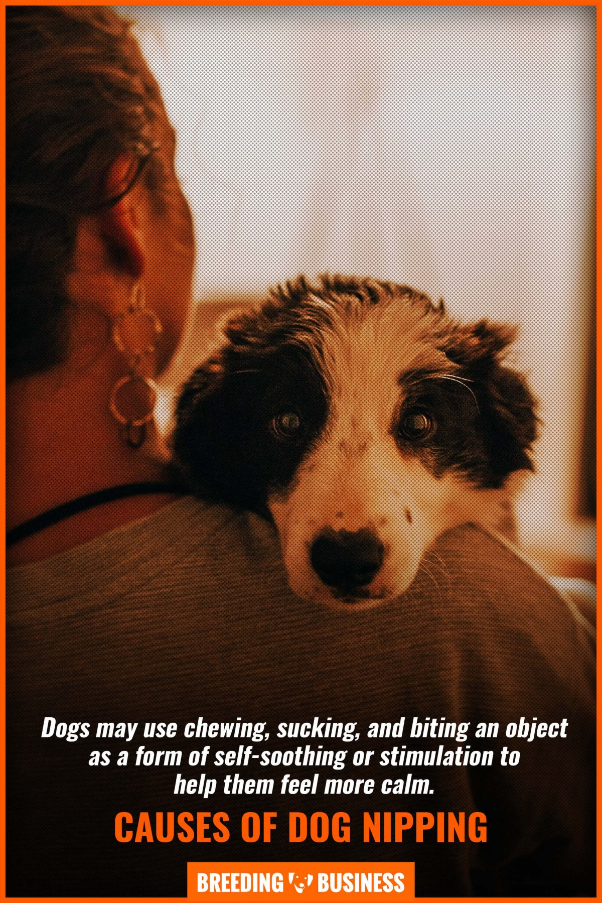 causes of dog nipping