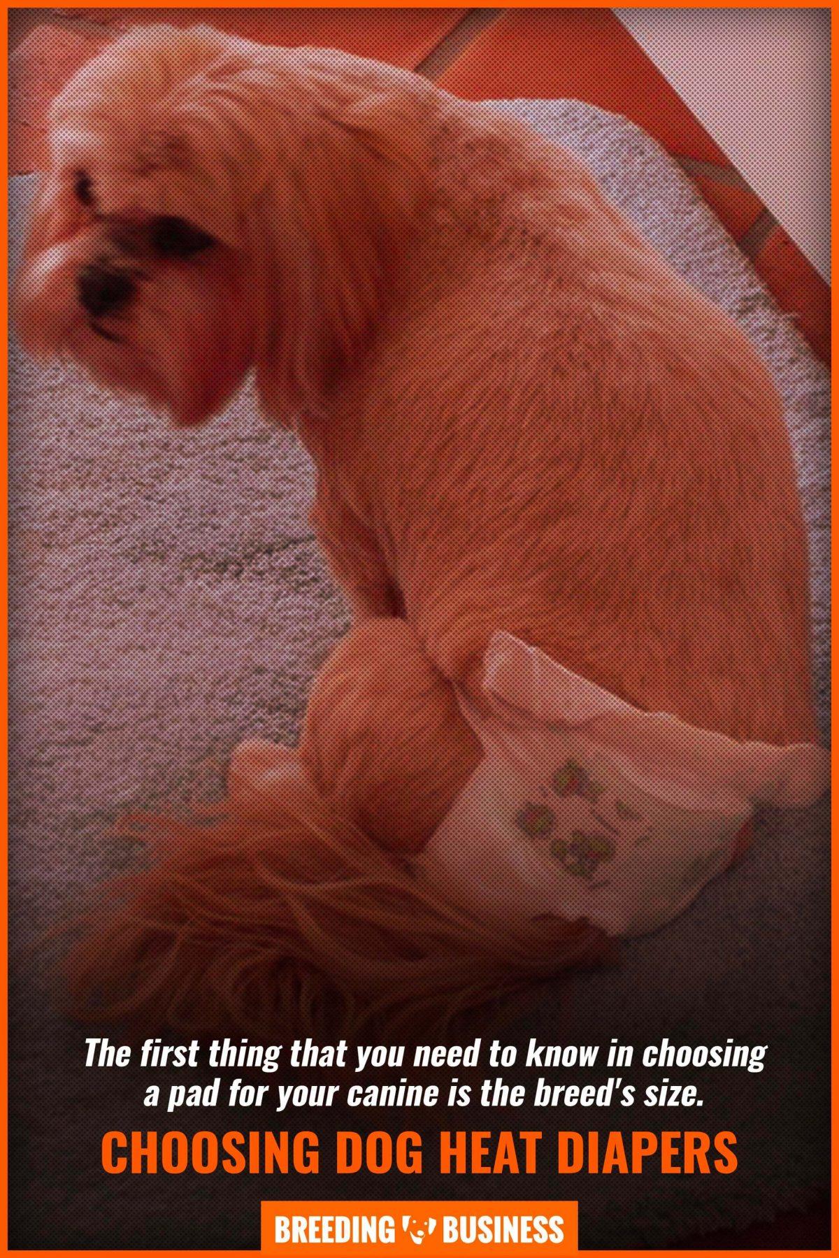 choosing dog heat diapers