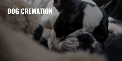 Dog Cremation – Procedure, Pros, Cons & Pricing