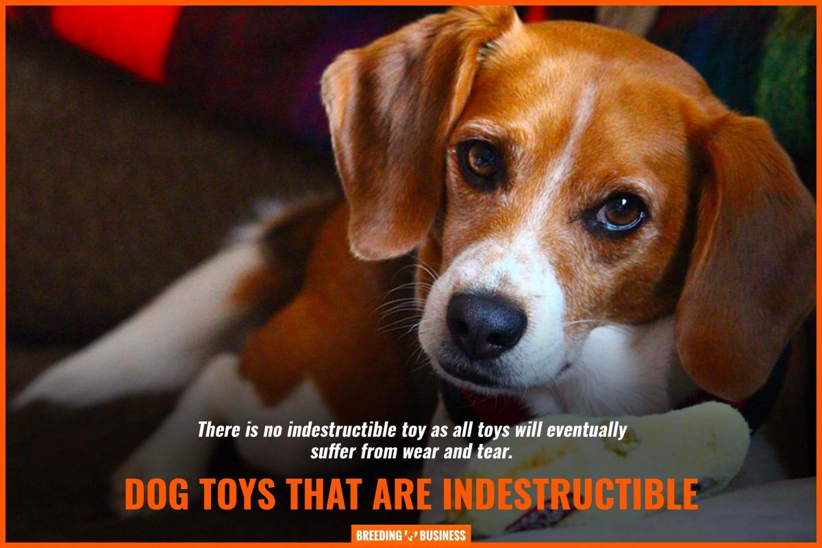 dog toys that are indestructible