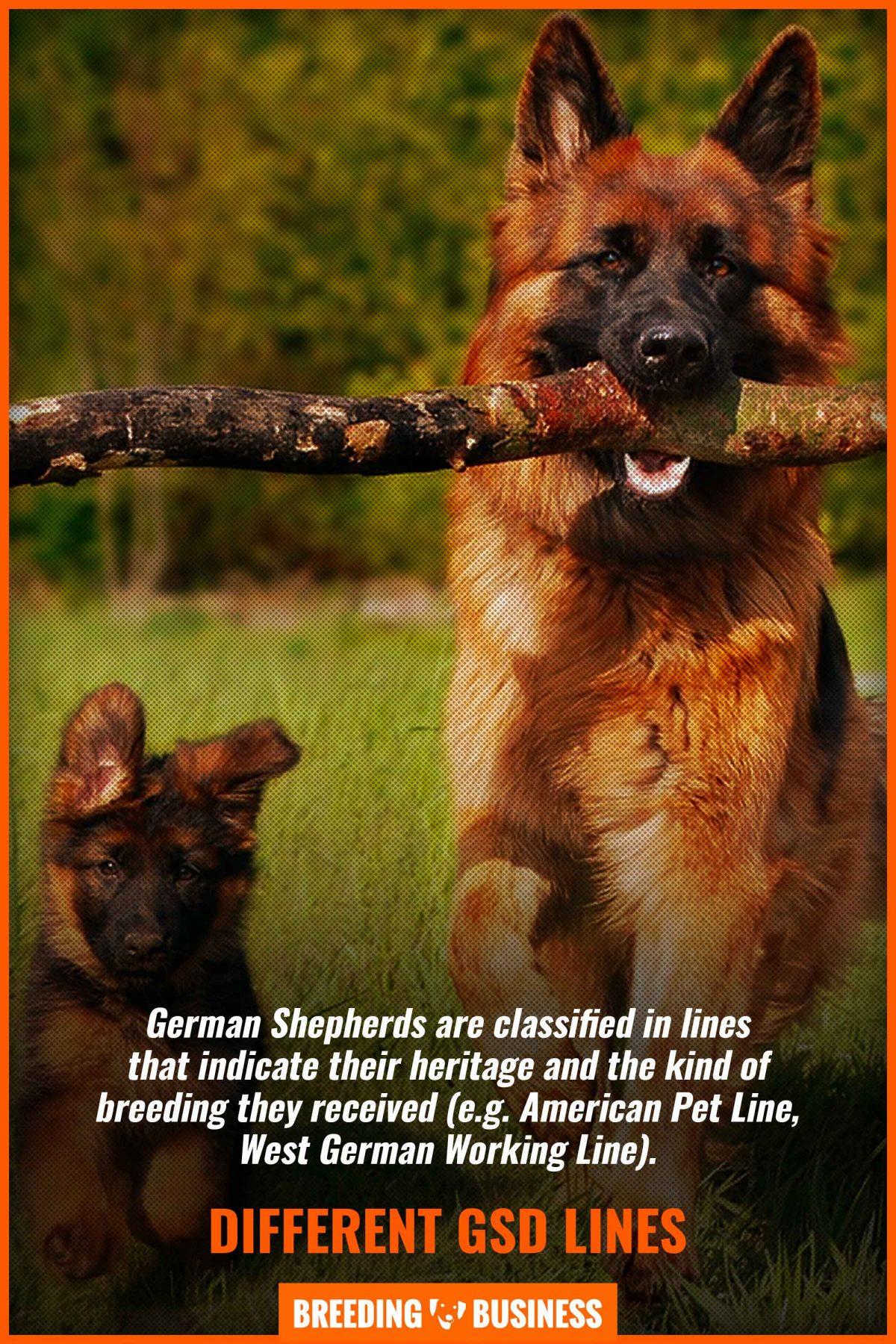 german shepherd lines