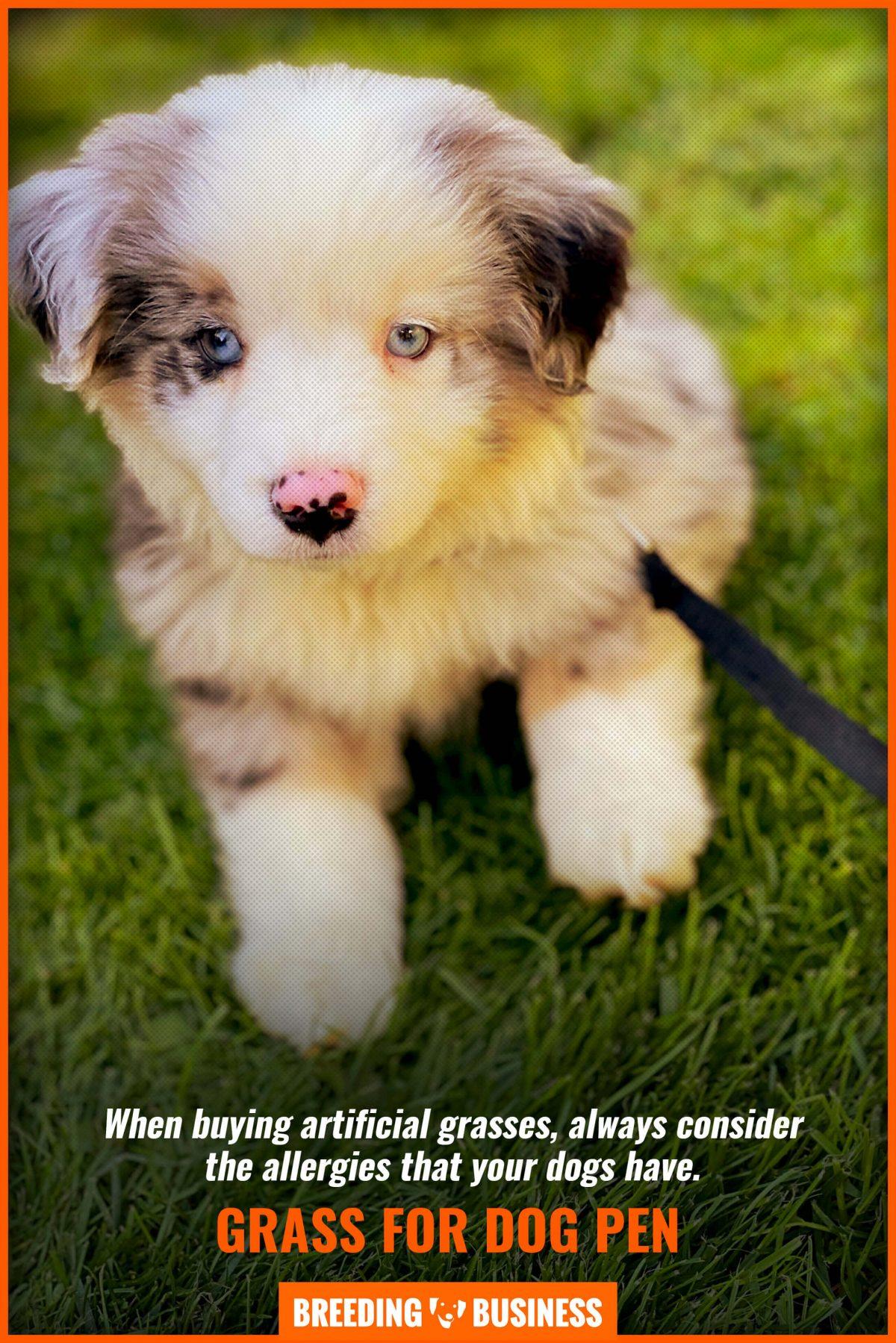 grass for dog pen