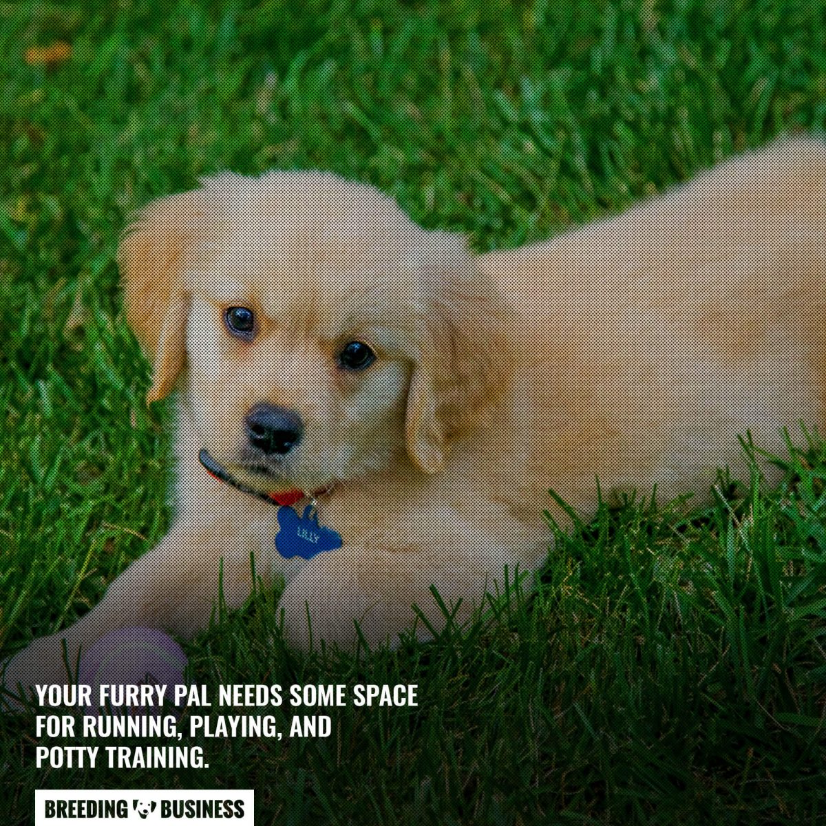 grass space for dogs