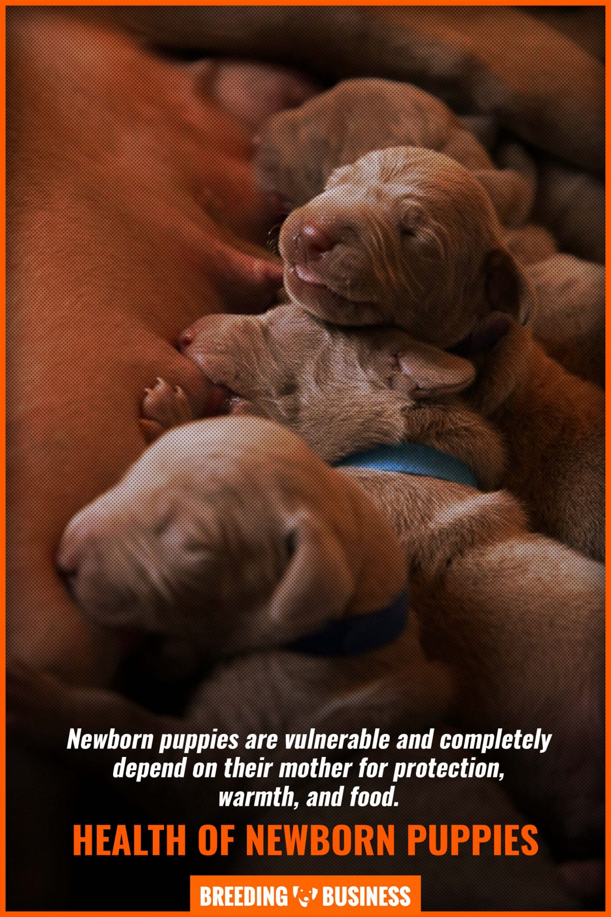 health of newborn puppies