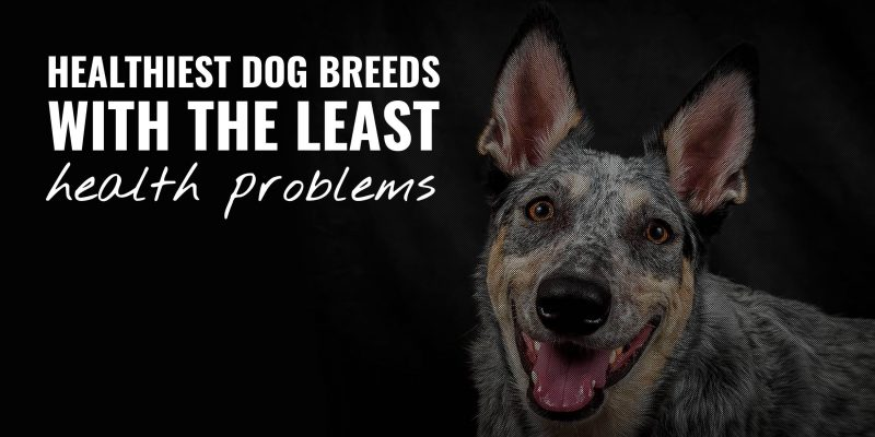 20 Healthiest Dog Breeds With The Least Health Problems