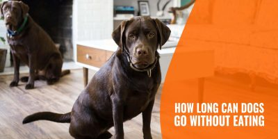 How Long Can Dogs Go Without Eating?
