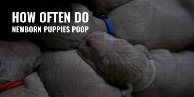 how often do newborn puppies poop