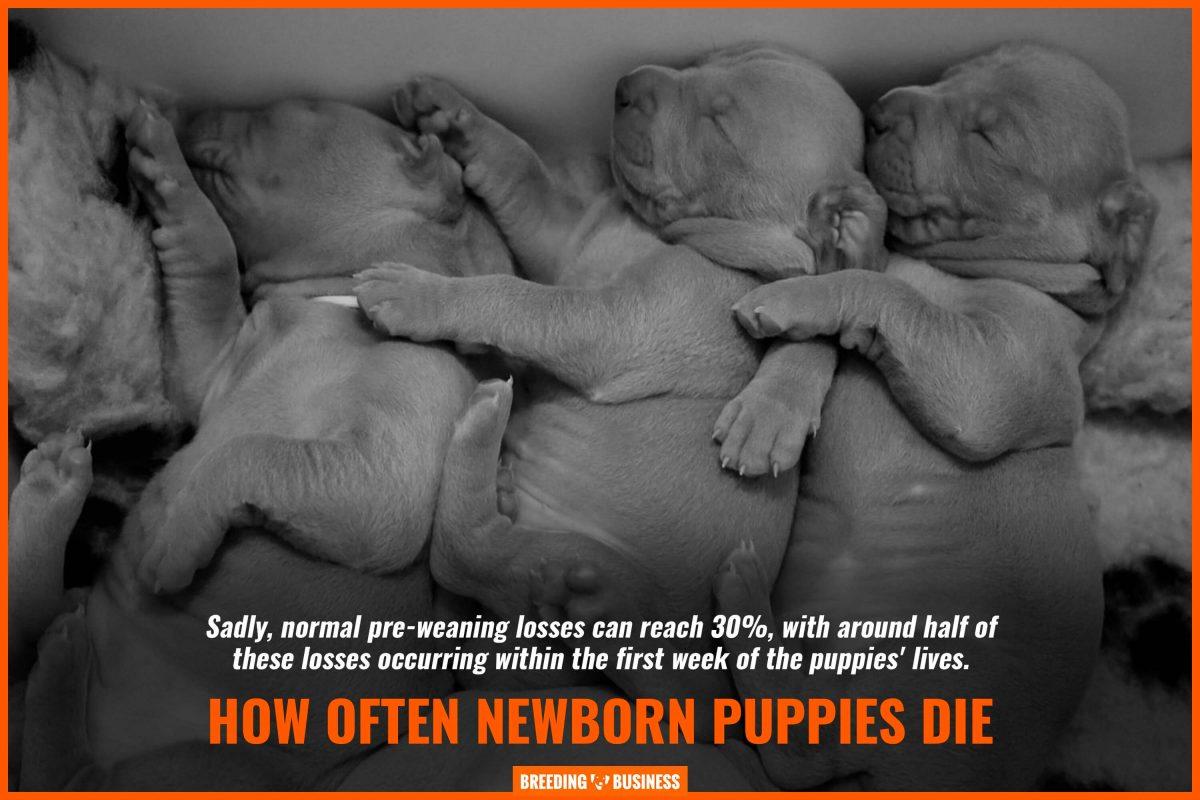 how often newborn puppies die