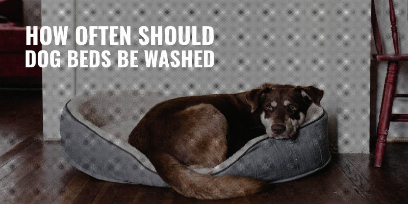 how often should dog beds be washed