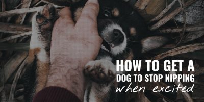 How to Get a Dog to Stop Nipping When Excited