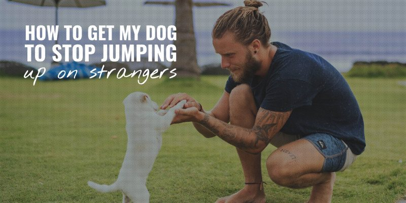 how to get my dog to stop jumping up on strangers
