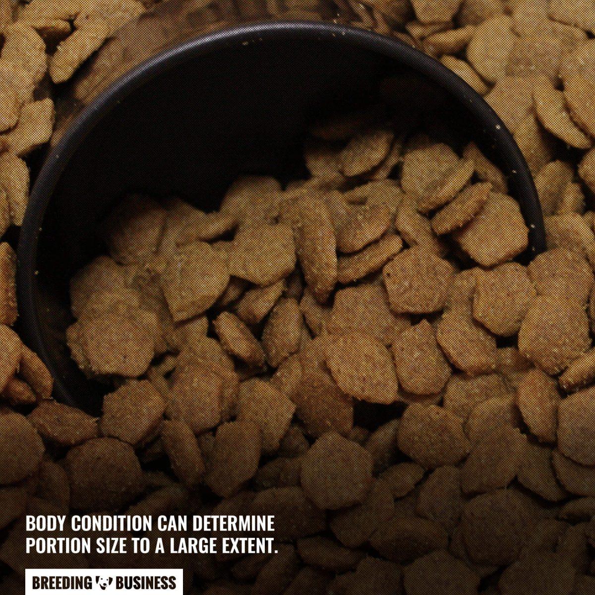 large breed dog food portion