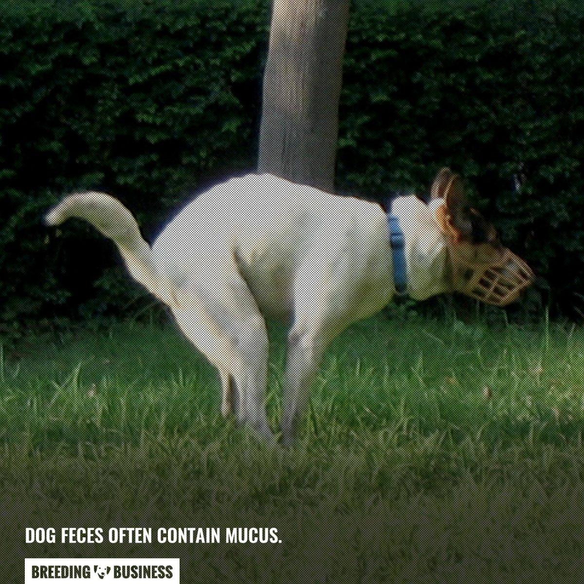 mucus in dog feces