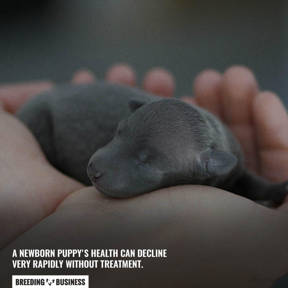 newborn puppy health decline