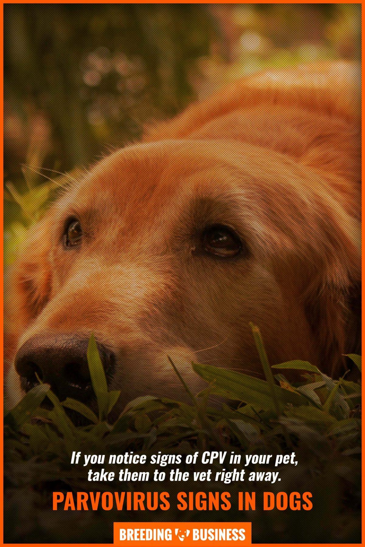 parvovirus signs in dogs