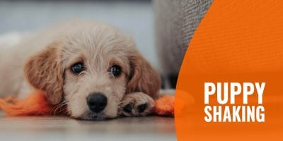 Puppy Shaking – Causes, Prevention, Solutions & FAQs