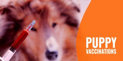Puppy Vaccinations – List of Shots, Timeline & Prices