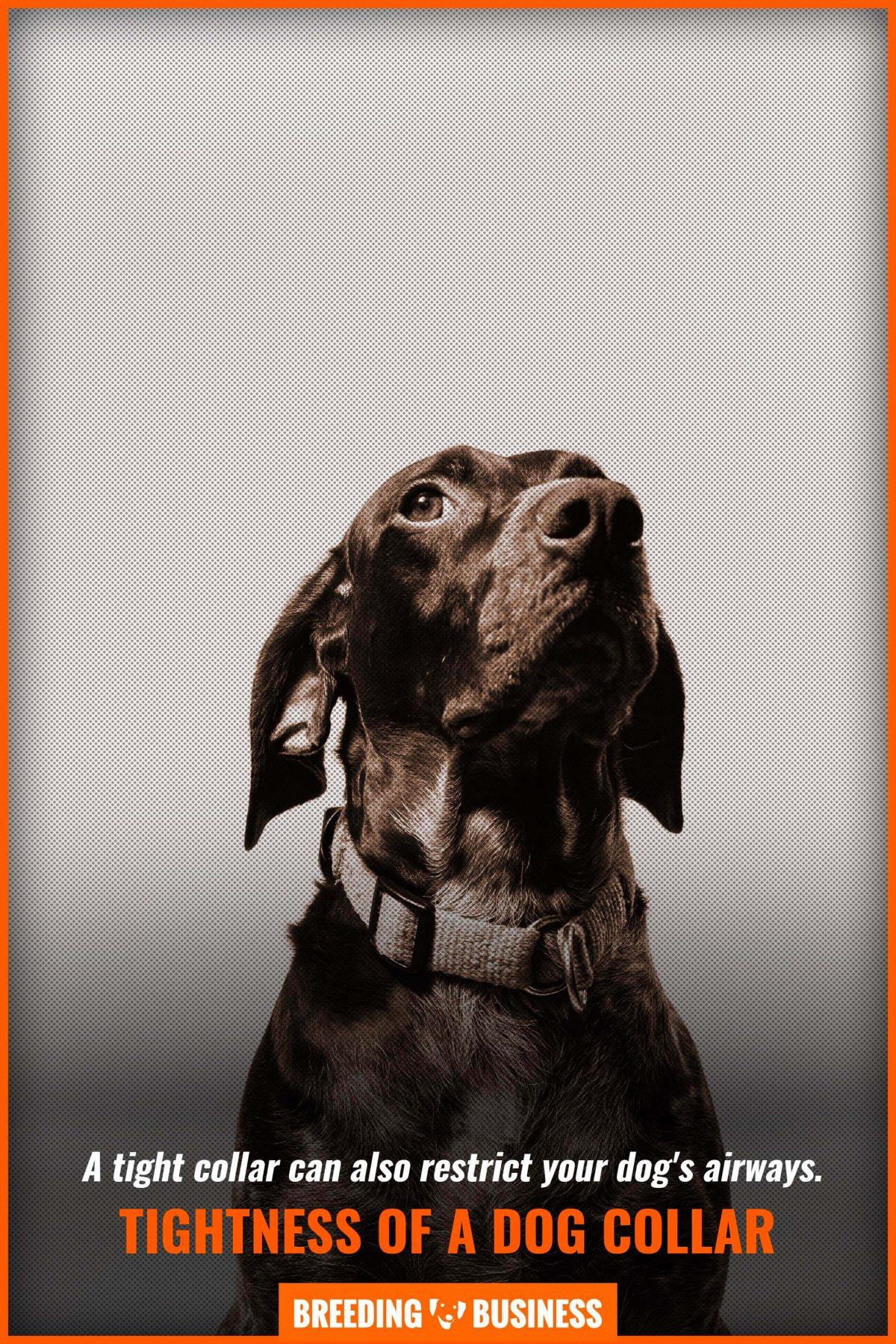 tightness of a dog collar