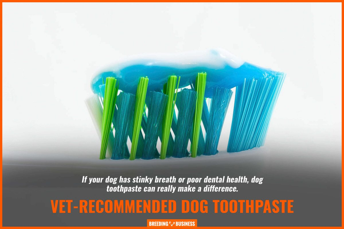 vet-recommended dog toothpaste