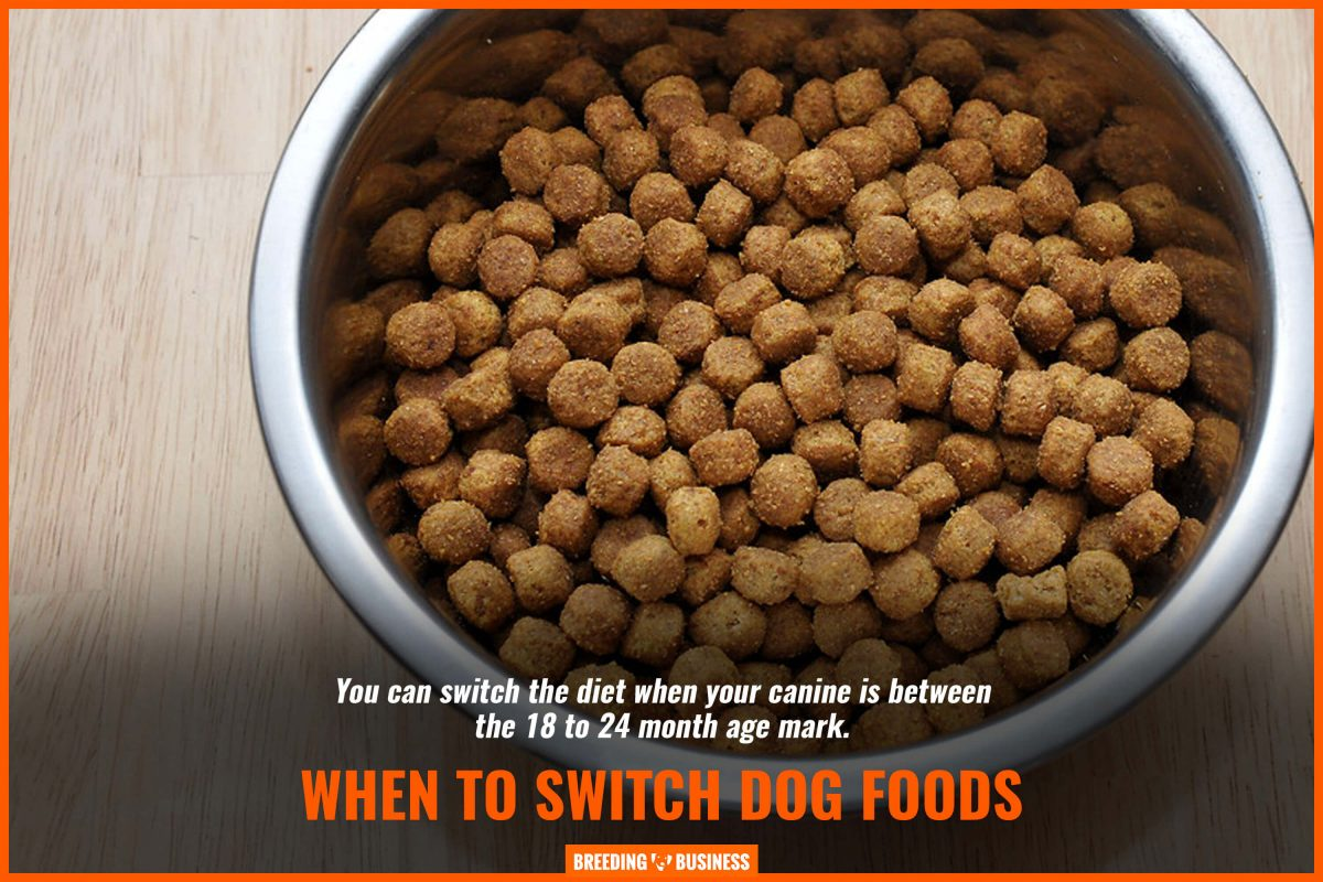 when to switch dog foods