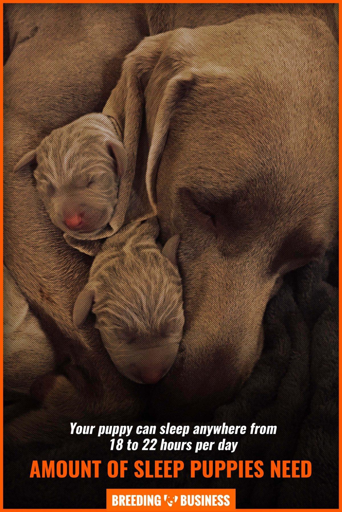 amount of sleep puppies need