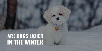 are dogs lazier in the winter