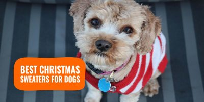 best christmas sweaters for dogs