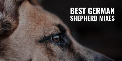 best german shepherd mixes