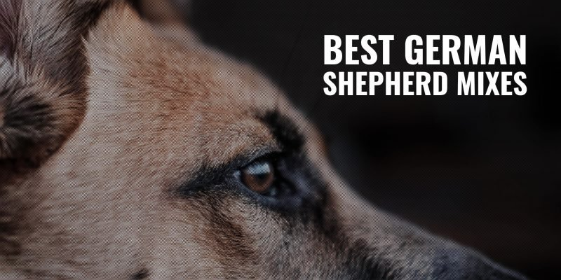 best german shepherd mixes