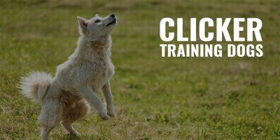 Clicker Training Dogs