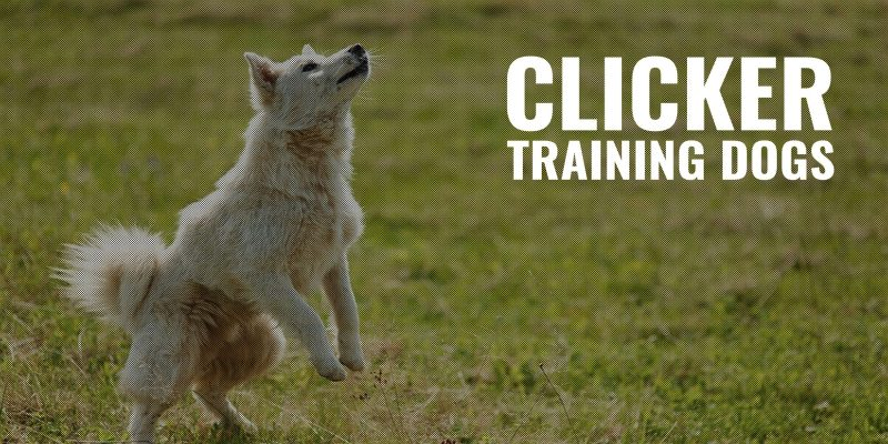 clicker training dogs