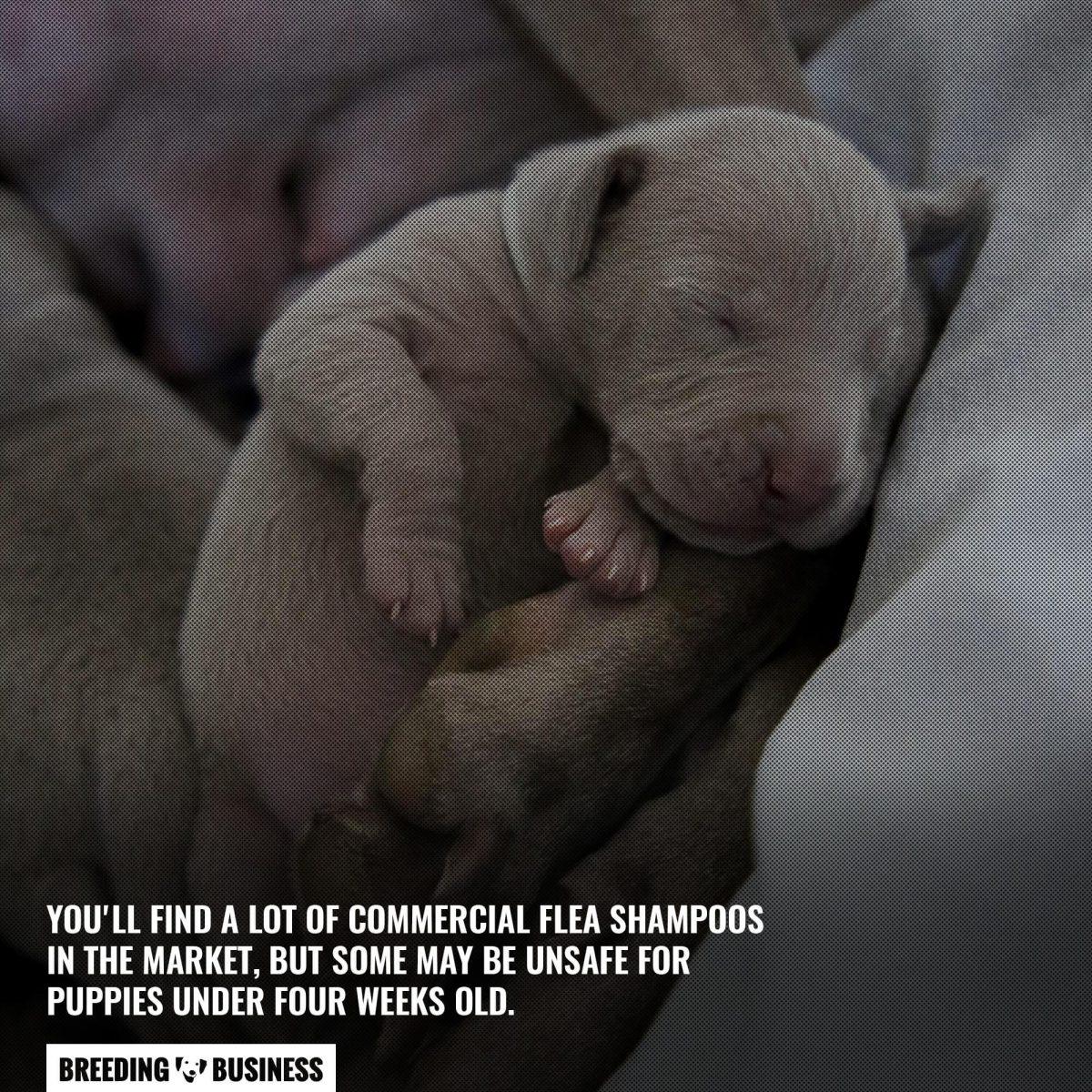 commercial flea shampoos for newborn puppies