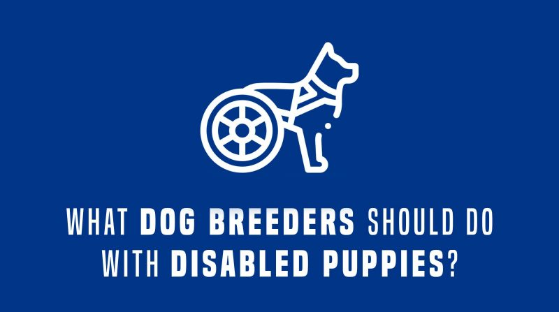 disabled dogs and breeders
